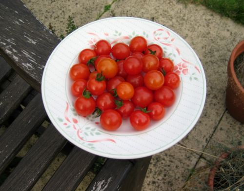 First Batch Of Cherry Tomatoes